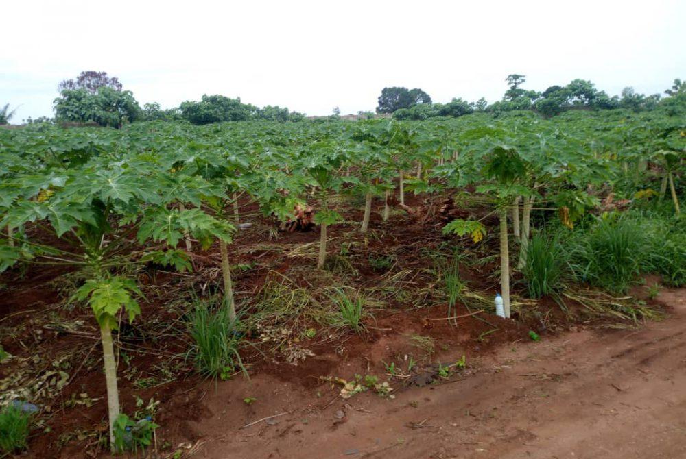 ONG CASA GRANDE BENIN - AGROPASTORAL